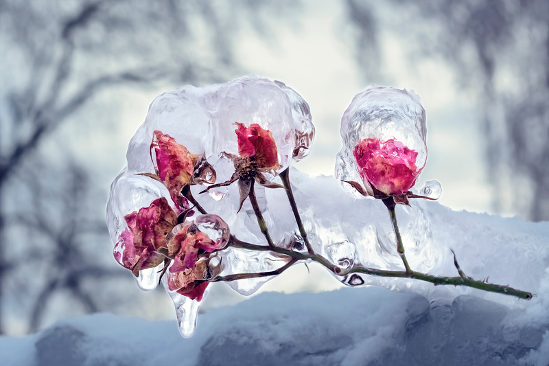 Encased in Ice