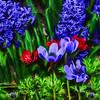 Garden Snapshot