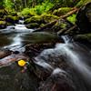 Steelhead - Lower Creek