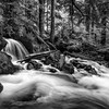 The Forest and the Creek - BW