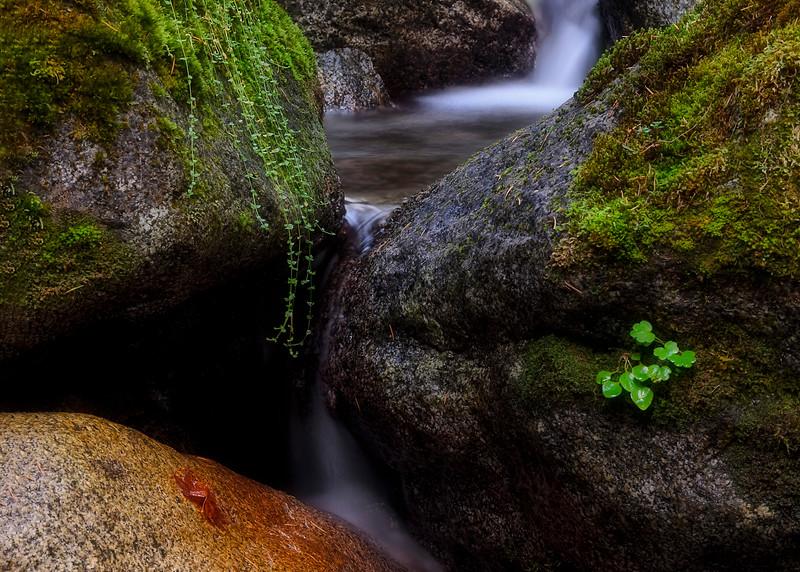 Gentle Flow