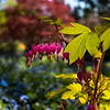 Van Dusen - Lensbaby - Bleeding Heart