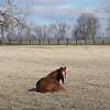 Kentucky horse farm near Lexington