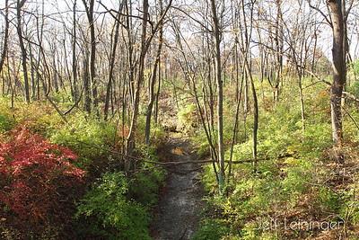 Blackhawk Springs