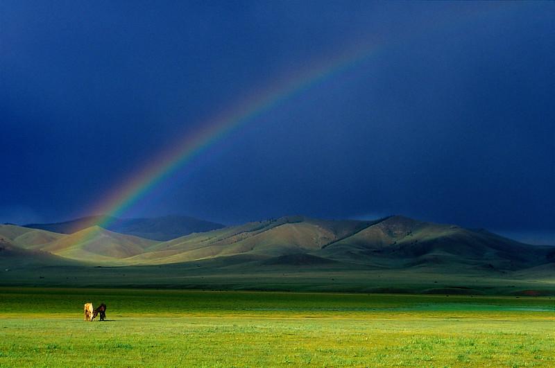 Horses and rainbow. Naadam festival, Ihtamir. Mongolia.