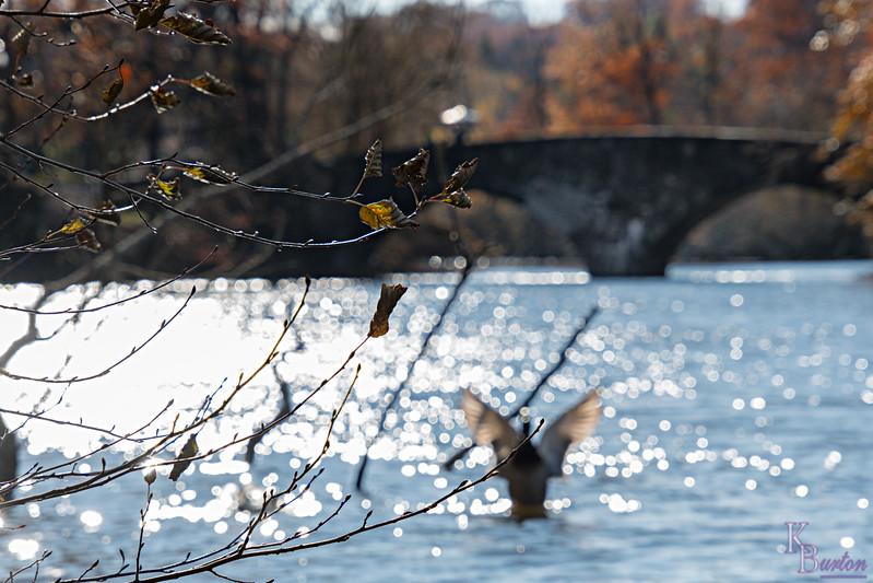 DSC_9593 fall scene at Clove Lakes
