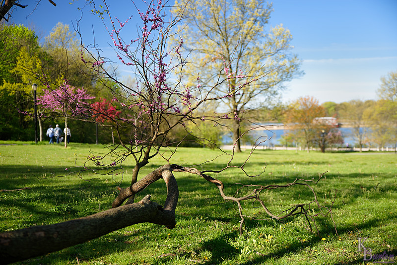 DSC_5946 spring time at silver Lakes_DxO