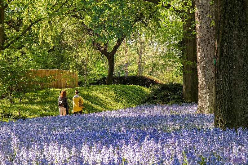 DSC_7899 mid-afternoon garden stroll
