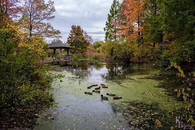 DSC_6915 the Mitsubishi wild wetlands