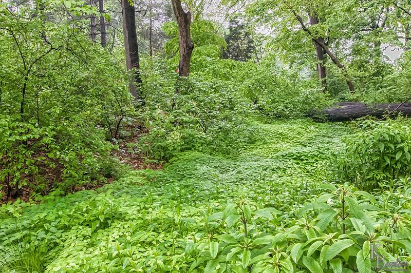 DSC_2261 study in green