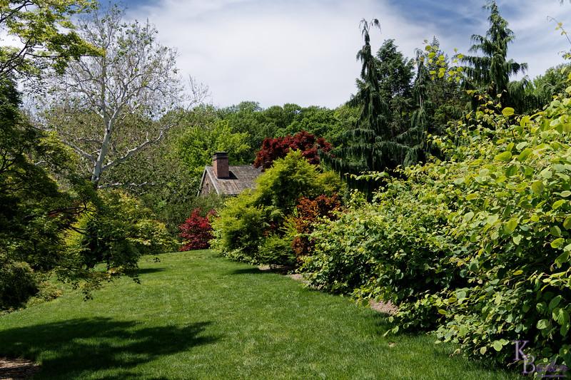 DSC_1629 springtime at the  Bronx botanical gardens_DxO