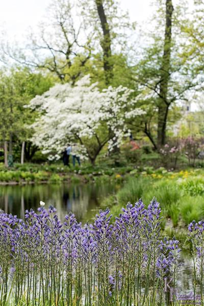 DSC_1778 scenes from Brooklyn Botanical gardens