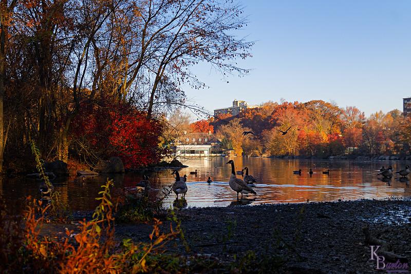 DSC_8108  sunrise in the fall at Clove lakes_DxO