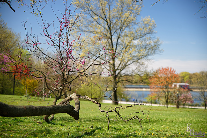 DSC_5487 spring time at Silver Lakes_DxO
