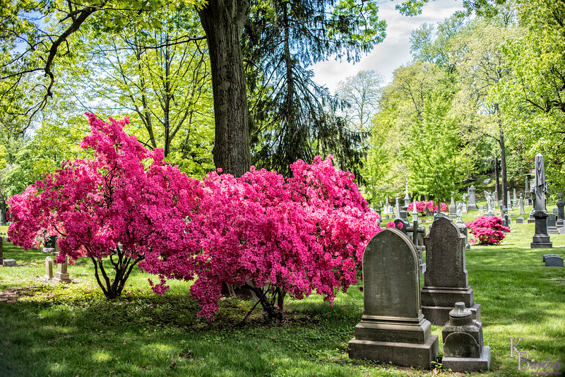 DSC_2372 spring scenes from Greenwood Cemetery