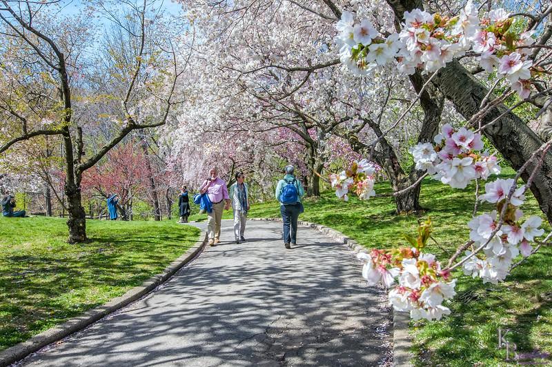 DSC_0619 scenes from the Botanical gardens on Easter Sunday