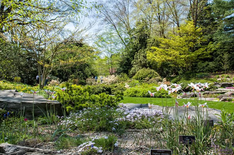 DSC_6708 spring time in rock garden at the Bronx Botanical Garden