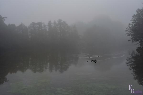 DSC_7994 foggy morning at the lake