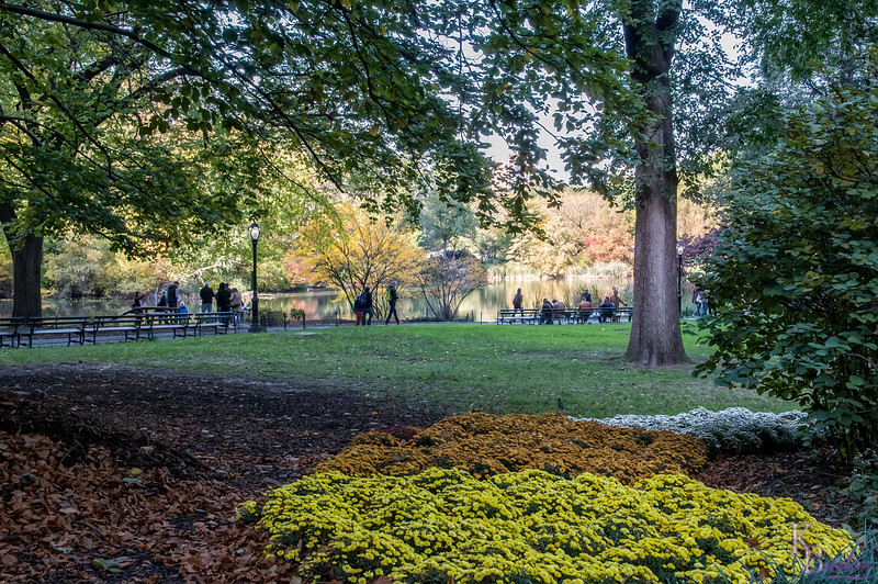 DSC_7457 fall scene's from Central Park