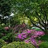 DSC_1468 spring scene at the Brooklyn Botanical Gardens