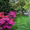 DSC_4611 spring scene at the botanical gardens
