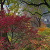 DSC_0771 fall comes to Central Park  AI_Nik_DxO