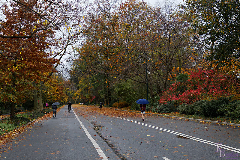 DSC_9101 Central Park in the fall_DxO