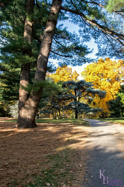 DSC_8839 fall scenes from the Botanical Gardens