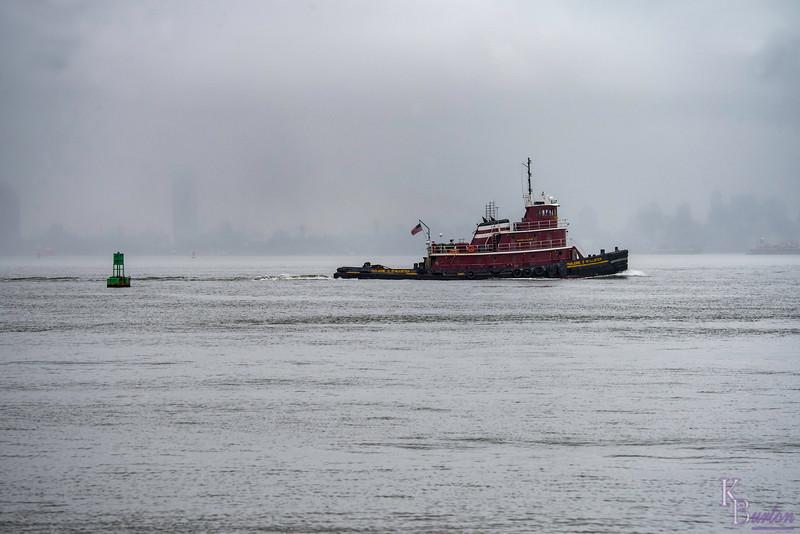 Fog on the Bay
