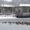 DSC_0999 geese hunker down during the blizzard