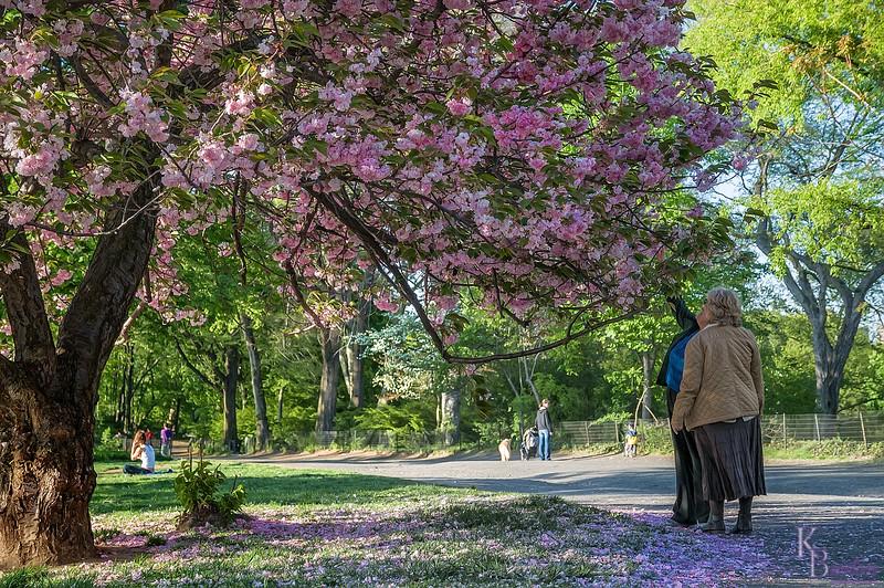 DSC_5824 Spring scene in Central Park