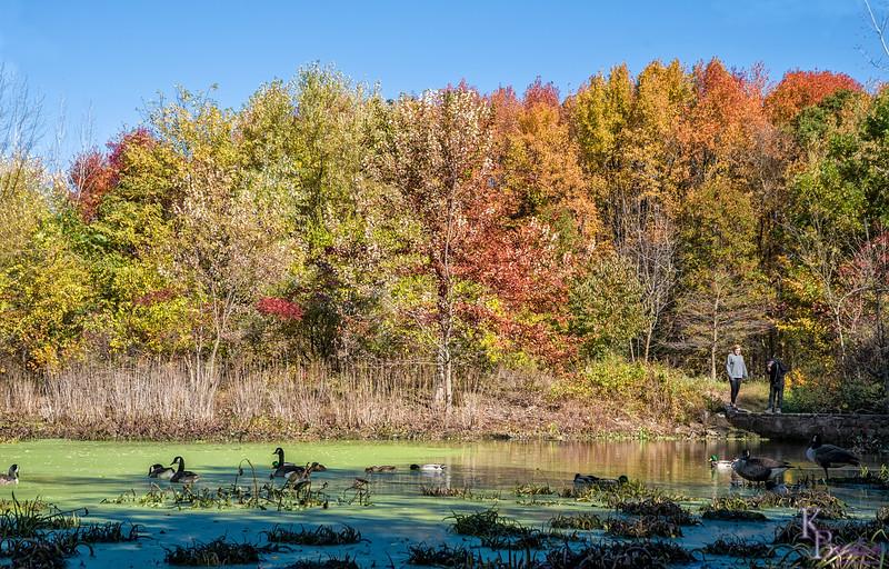 DSC_7676 Blue Heron park in the fall