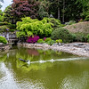 DSC_8090 springtime at the Japanese gardens