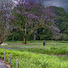 DSC_2588 rainy day pano at the Botanical gardens2