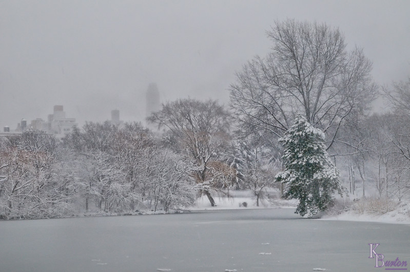 DSC_1485 Blizzard  feb  2010