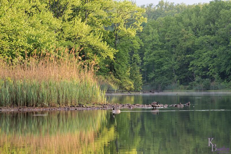 DSC_7014 dawn at Wolfe's pond_DxO