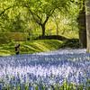 DSC_7891 mid-afternoon garden stroll