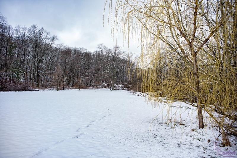 DSC_0101 snow in april