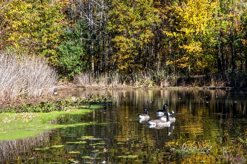 DSC_7713 Blue Heron park in the fall