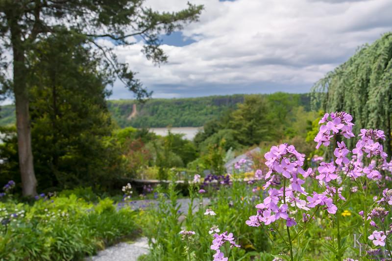DSC_5289 wild flowers - Wave Hill