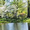 DSC_1721 scenes from Brooklyn Botanical gardens