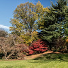 DSC_7928 fall time at the Bronx botanical gardens