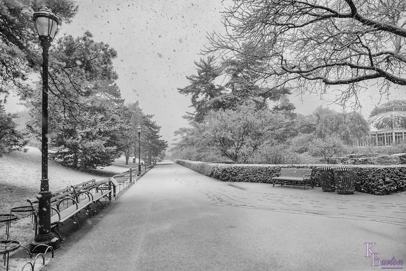 DSC_9067 snow storm at the Gardens