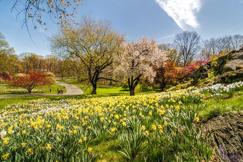 DSC_0517 daffodil hill