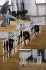 Rottie collage