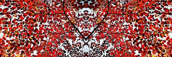 redtreekaleidoscope