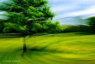 tree panning 2