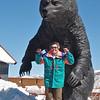 Grizzly Bear Grrrrrrr!<br /> Spiro Tunnel<br /> <br /> Park City, Utah<br /> 7 April 2010<br /> <br /> Photographer: Linda McCausland