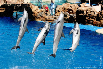 SeaWorld - San Diego, CA (Aug. 7, 2007)