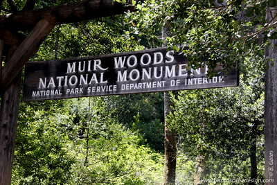In 1945, delegates from all over the world met in San Francisco to establish the United Nations.   On May 19, they traveled to Muir Woods to honor the memory of President Franklin Delano Roosevelt, whose death one month earlier had thrown the world into mourning.    President Roosevelt believed in the value of national parks as sources of inspiration and human renewal.  He also believed that good forestry practices and sustainable development of natural resources were keystones to lasting peace around the world.  Organizers of the event hoped that the profound beauty and serenity of Muir Woods would inspire the delegates to pursue the president's program for world peace as they met to establish the United Nations.